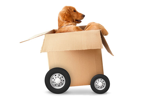 Moving with Pets - Pet Friendly Movers Toronto